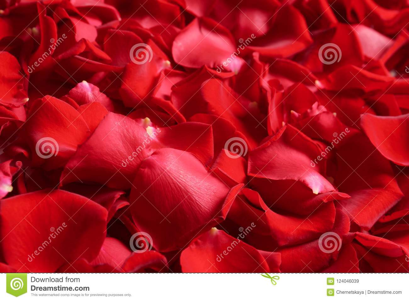 Beautiful red rose petals as background