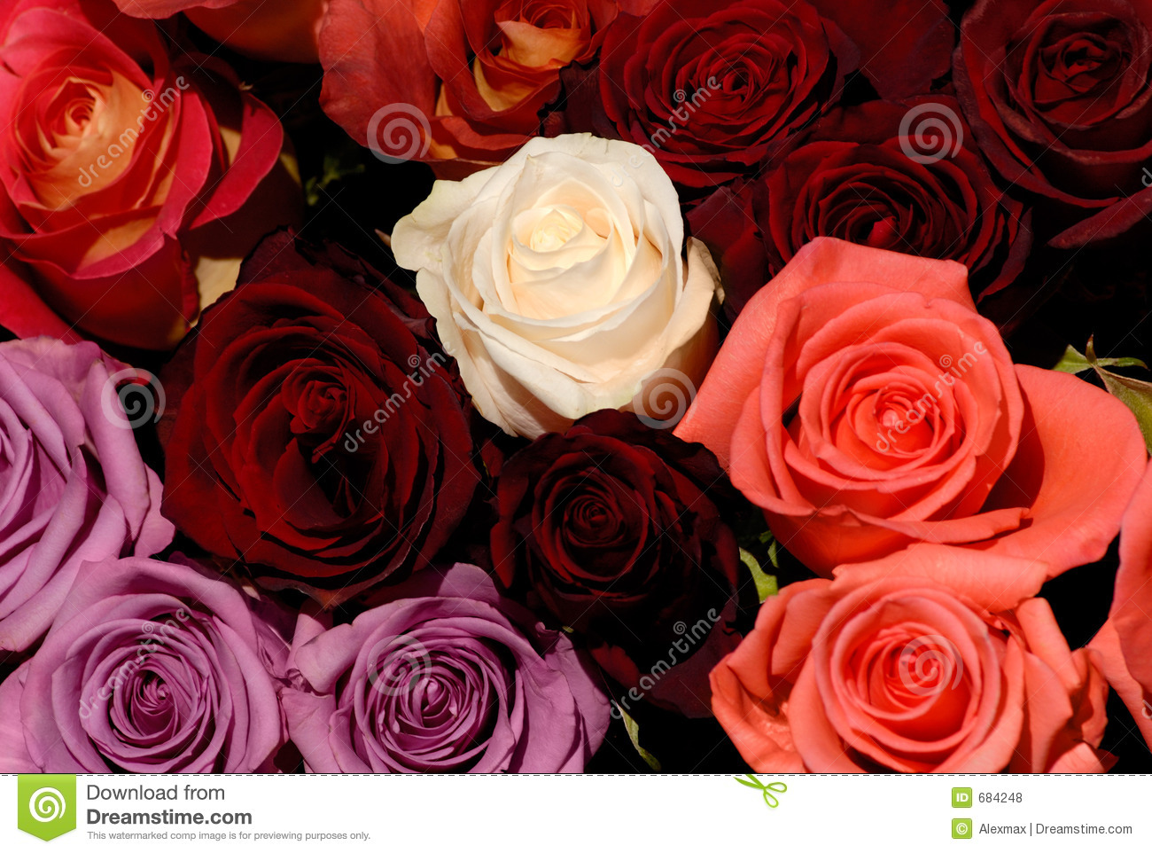 Beautiful Red And White Roses Flowers Love Background Stock Photo