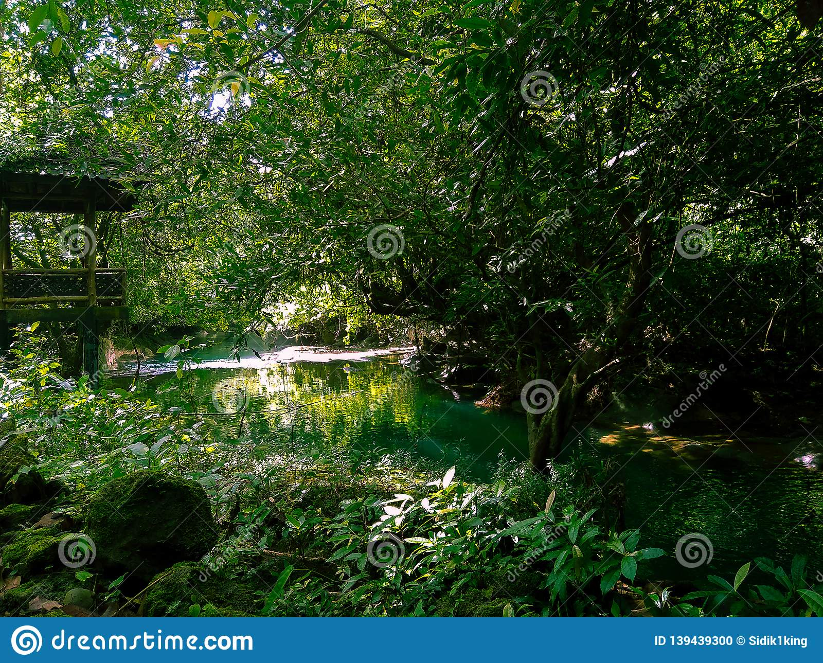 A beautiful river hidden in the forest.