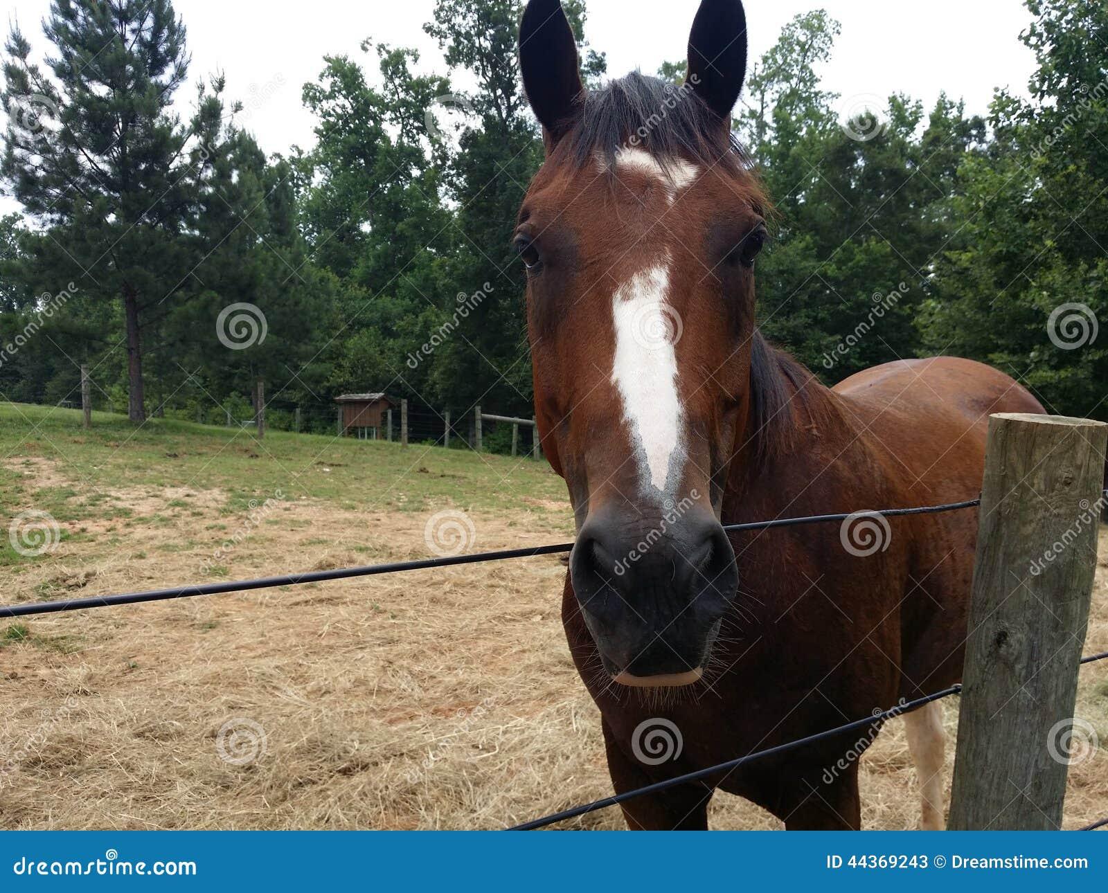 Beautiful roan horse stock image image of country stables 44369243 download beautiful roan horse stock image image of country stables 44369243 m4hsunfo