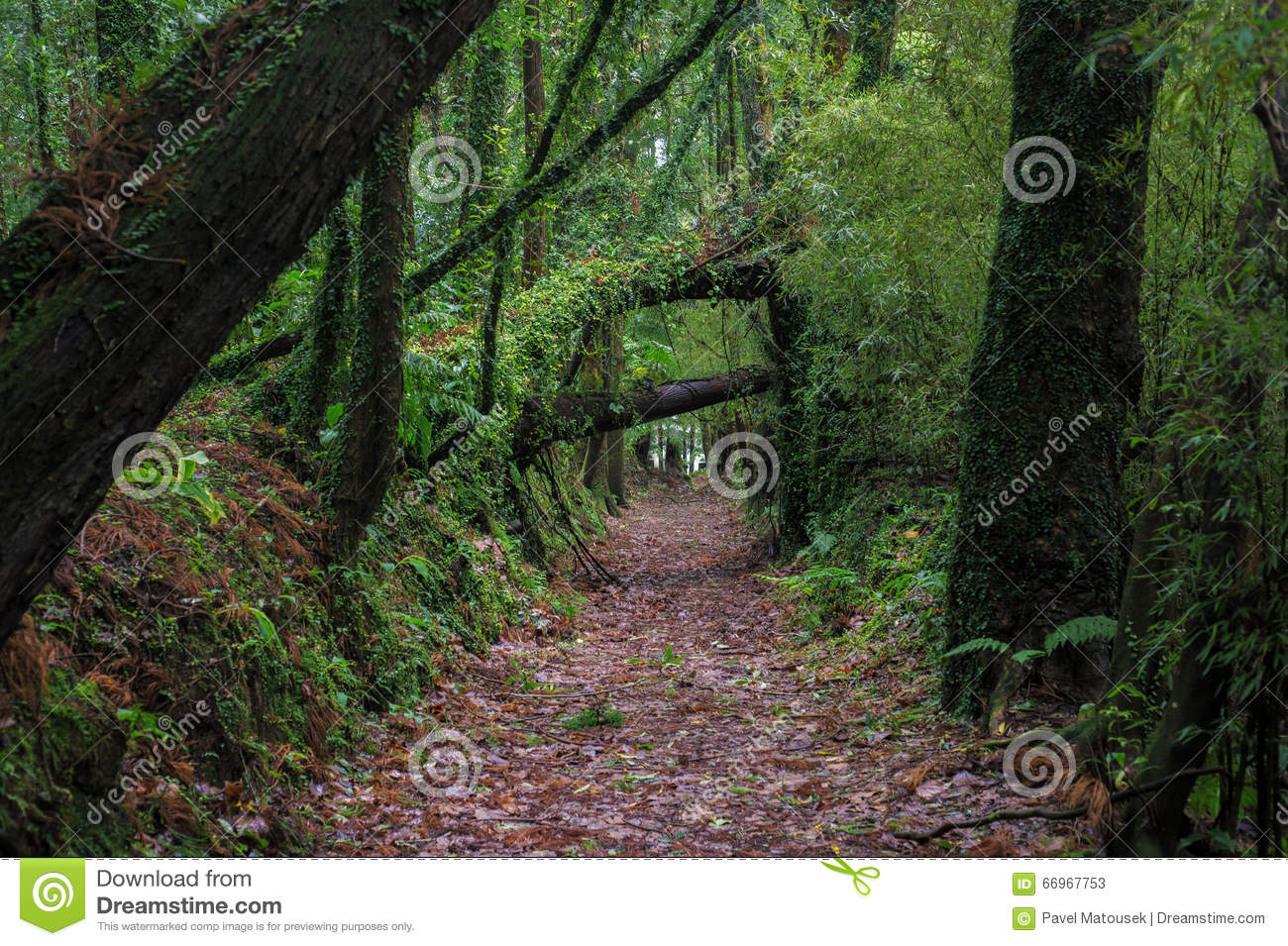 Beautiful Romantic Old Avenue Of Trees Stock Image 66967753