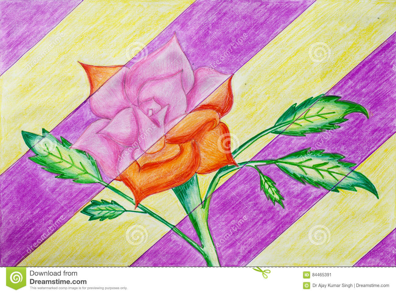 Beautiful rose drawing made by sketch pen and color pencil a child
