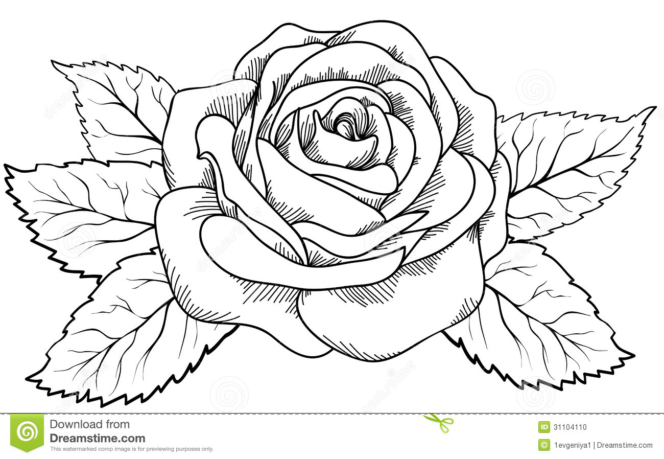 Beautiful Rose In The Style Of Black And White Engraving Stock