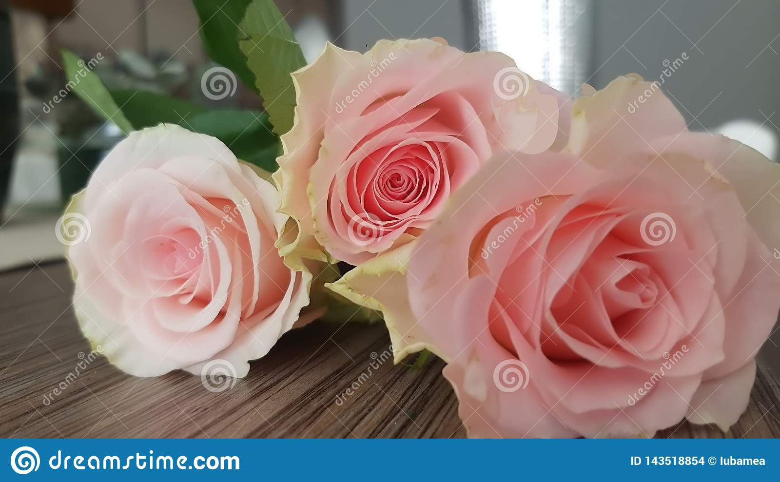 Beautiful roses of a delicate pink