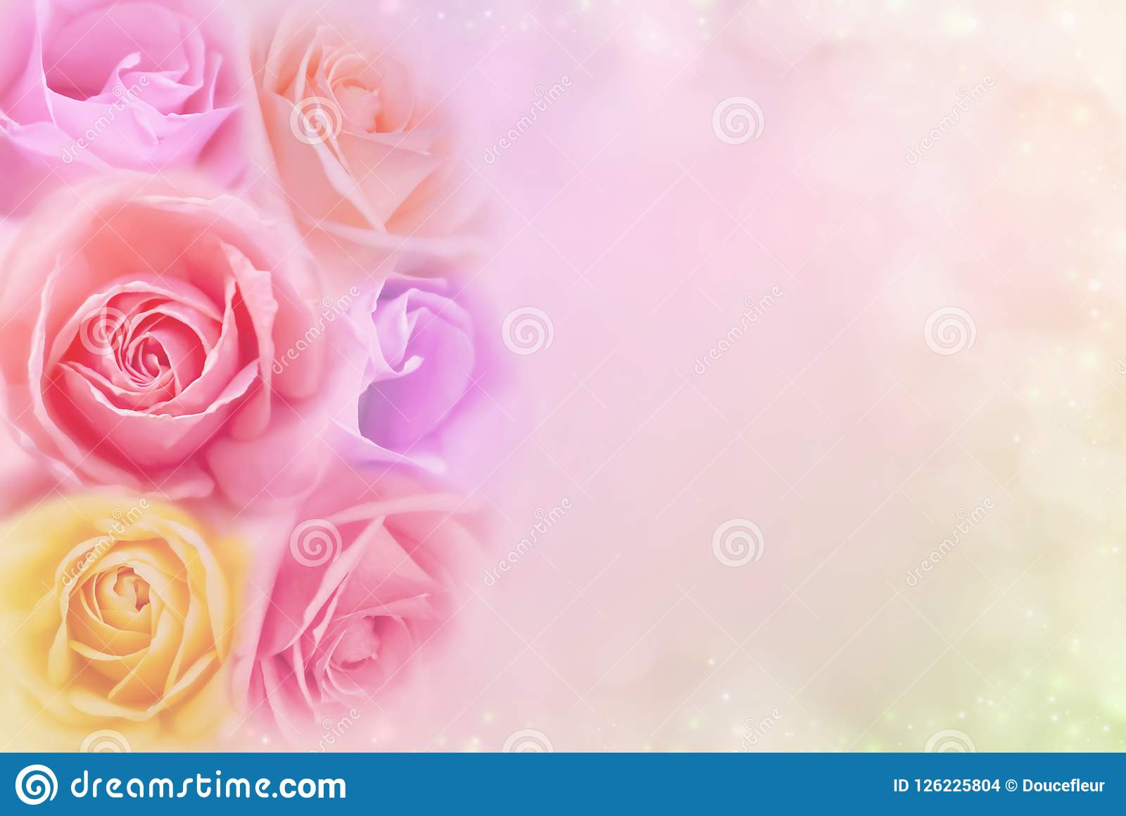 Beautiful roses flower in soft color filters, background for valentine or wedding card
