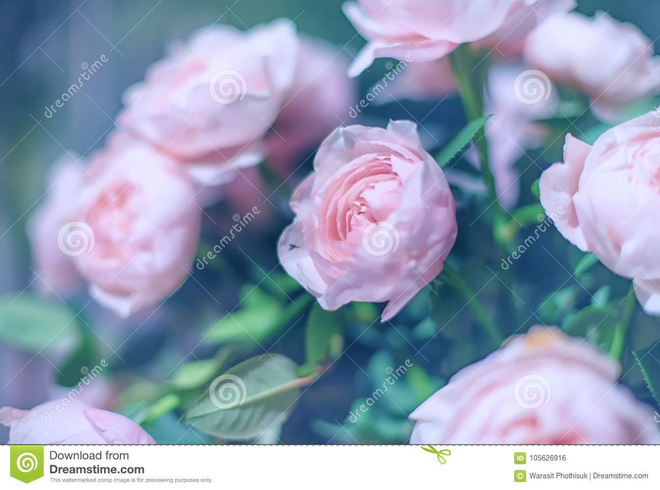 Beautiful roses flowers stock photo image of bouquet 105626916 download beautiful roses flowers stock photo image of bouquet 105626916 izmirmasajfo
