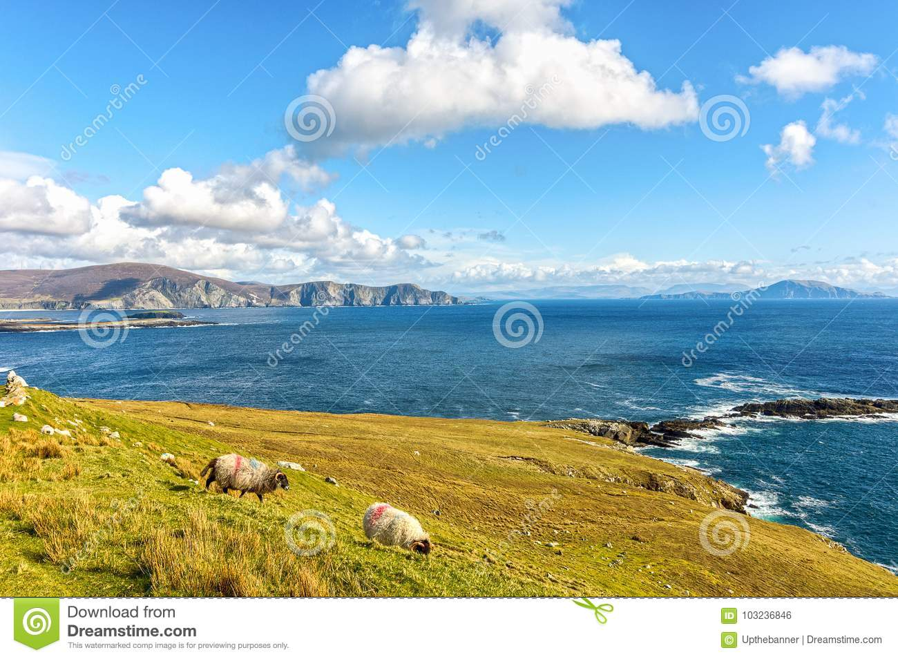 Beautiful rural irish country nature sheep landscape from the north west of ireland.