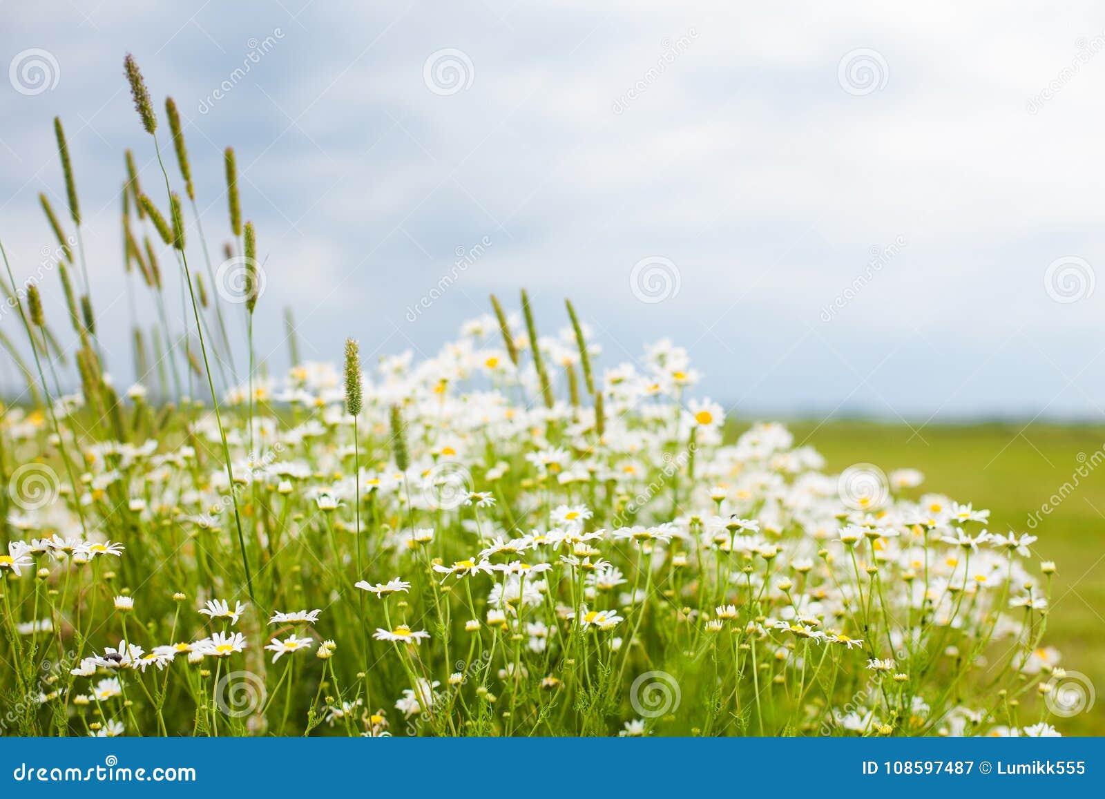 Rustic Nature Summer Flower Background