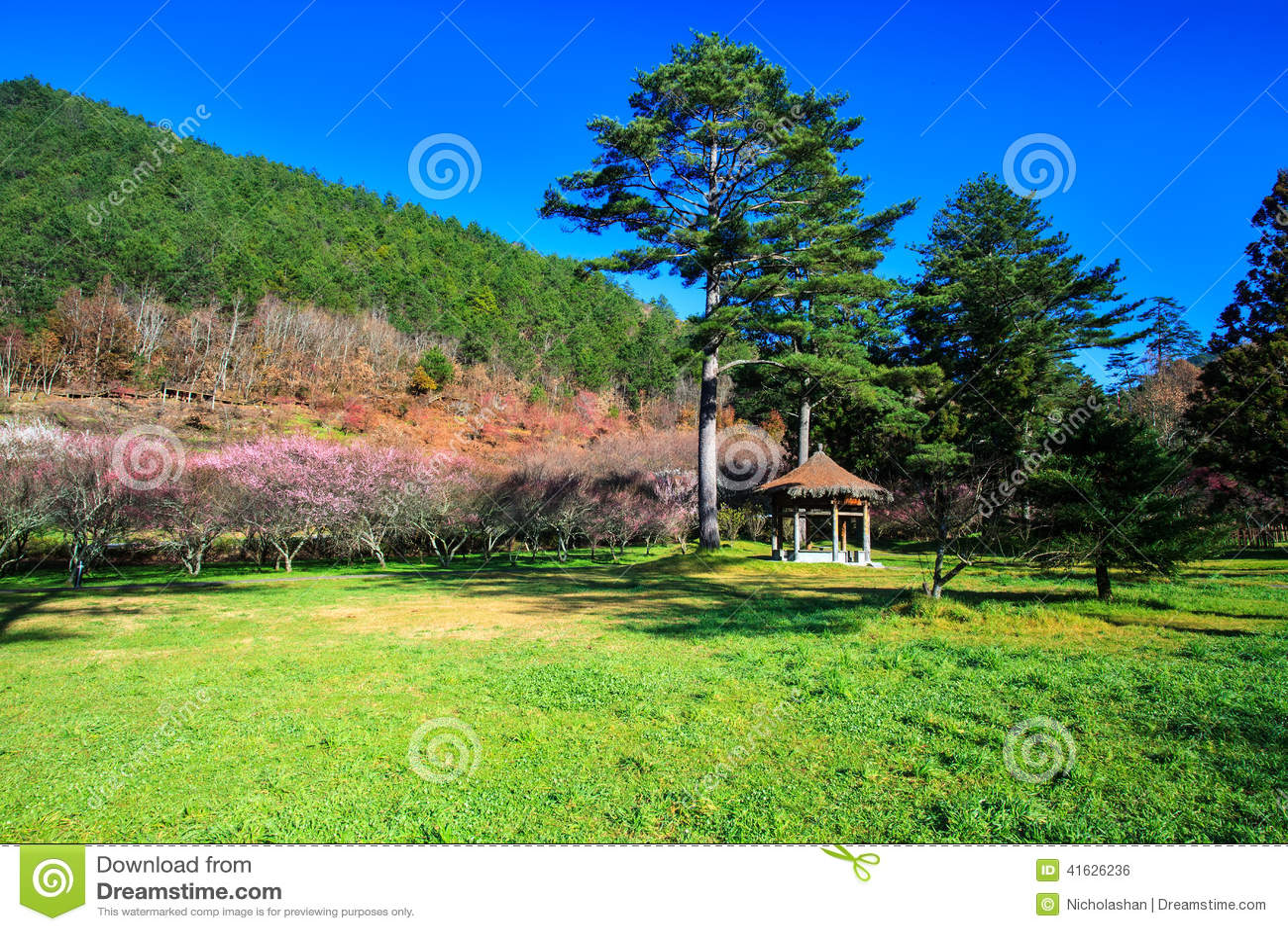 Beautiful Sakura Garden In Wuling Farm Taiwan Stock Photo