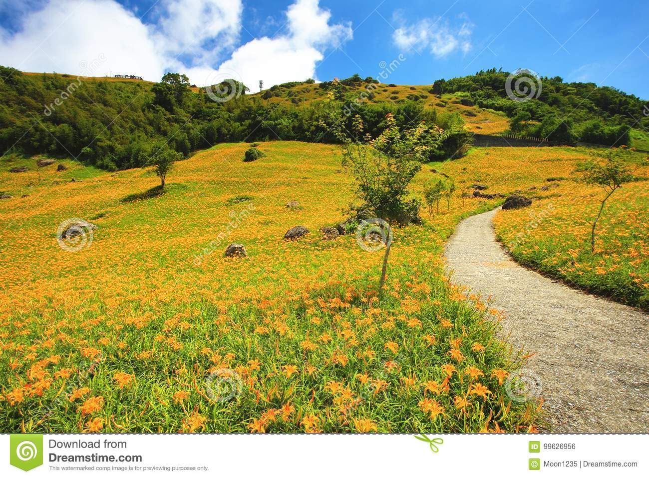 Beautiful scenery of daylily flowers blooming among the mountains beautiful scenery of daylily flowers blooming among the mountains with path izmirmasajfo