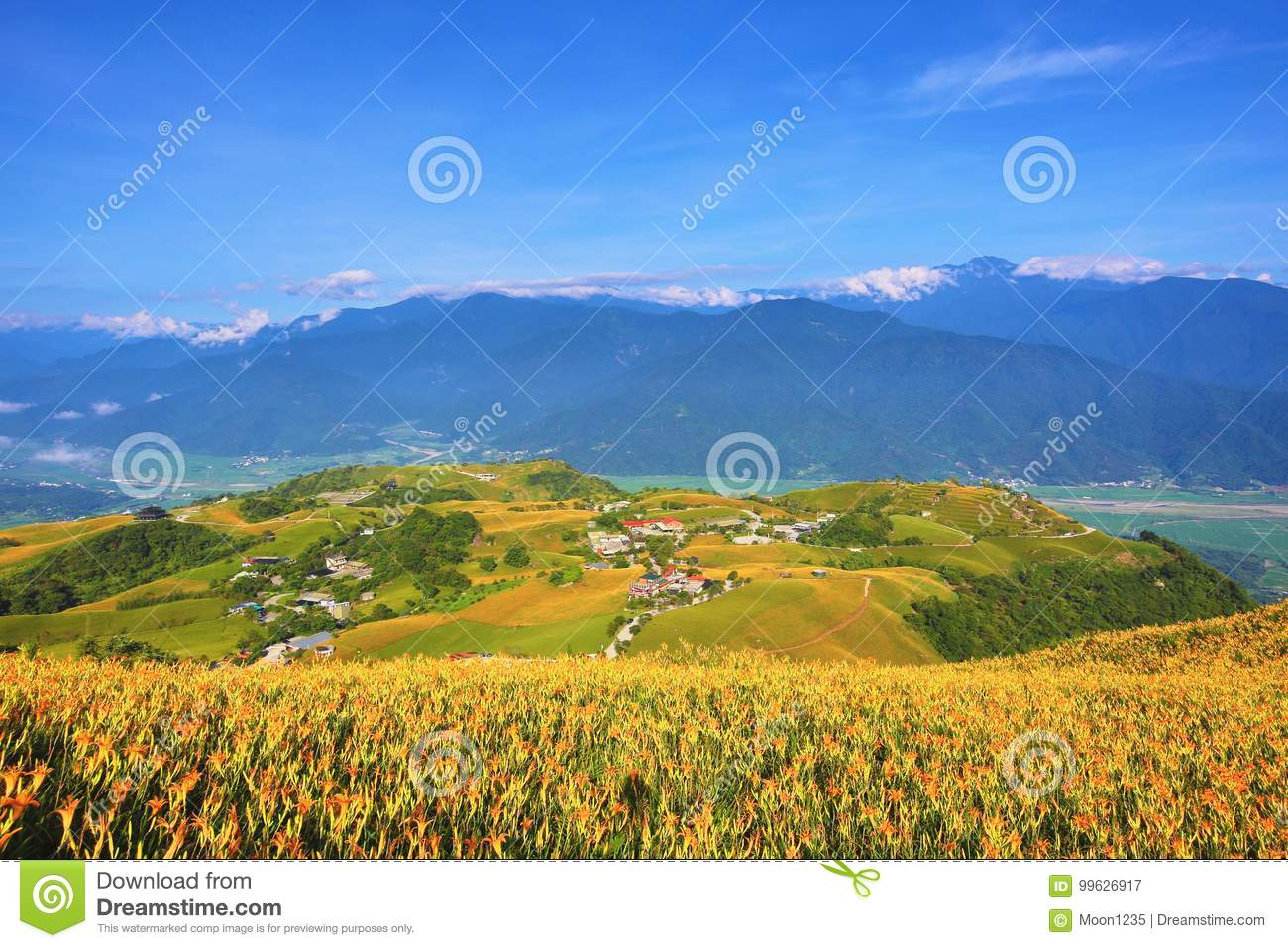 Beautiful scenery of daylily flowers with village and mountains beautiful scenery of daylily flowers with village and mountains izmirmasajfo