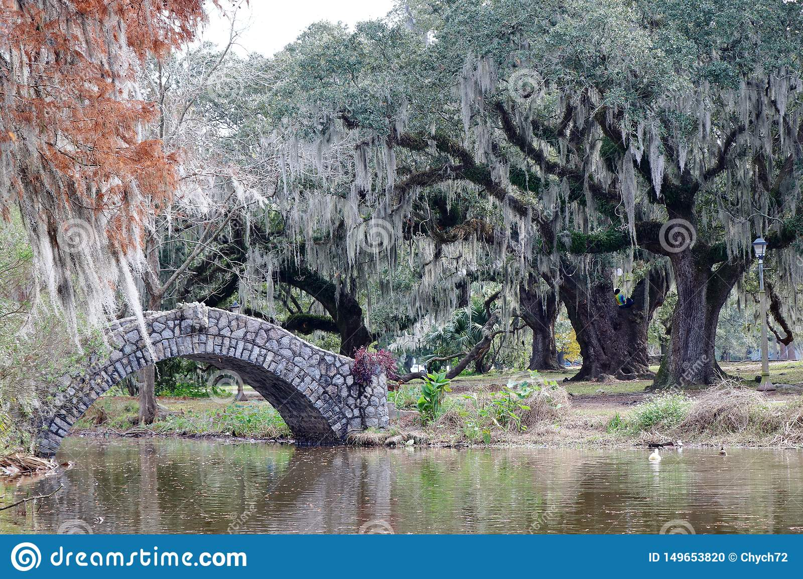 A beautiful scenic view of the city park of New Orleans, Louisiana