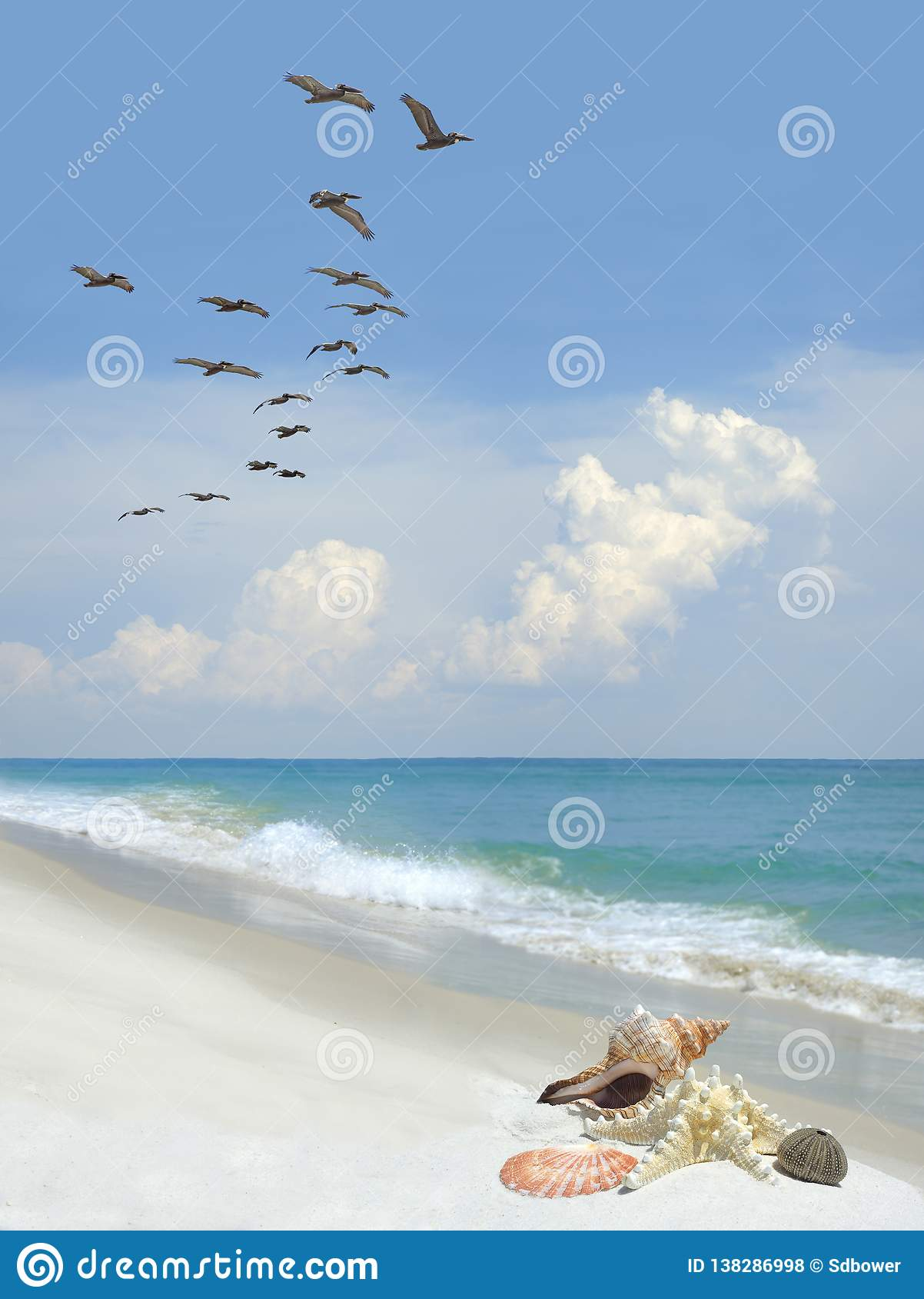 Beautiful Sea Shells on a White Sand Beach as a Flock of Pelicans Fly By