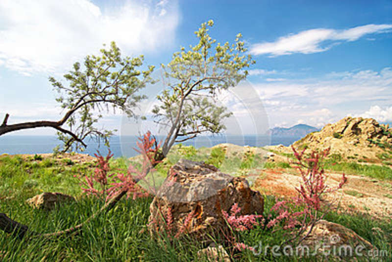 Beautiful sea view with tree and bushes in blossom