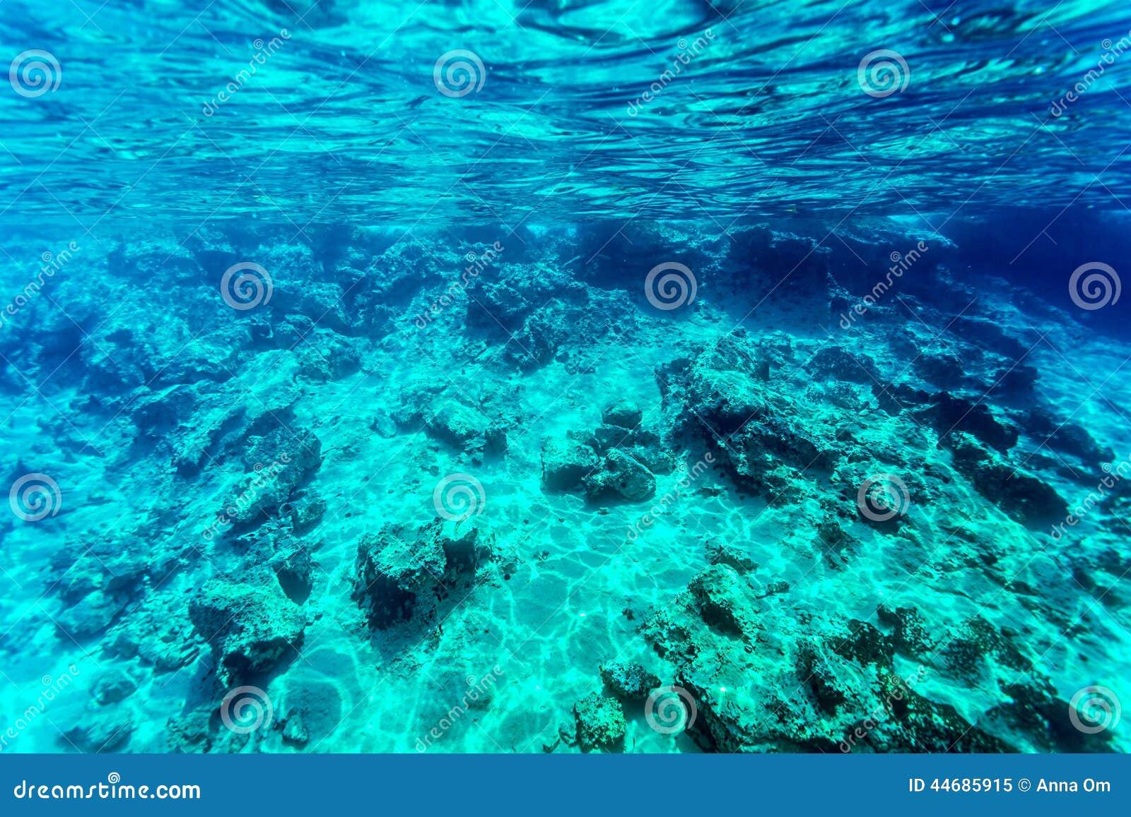 Sea Bottom Of The Sea Fish Seabed Sea: Beautiful Seabed Background Stock Photo
