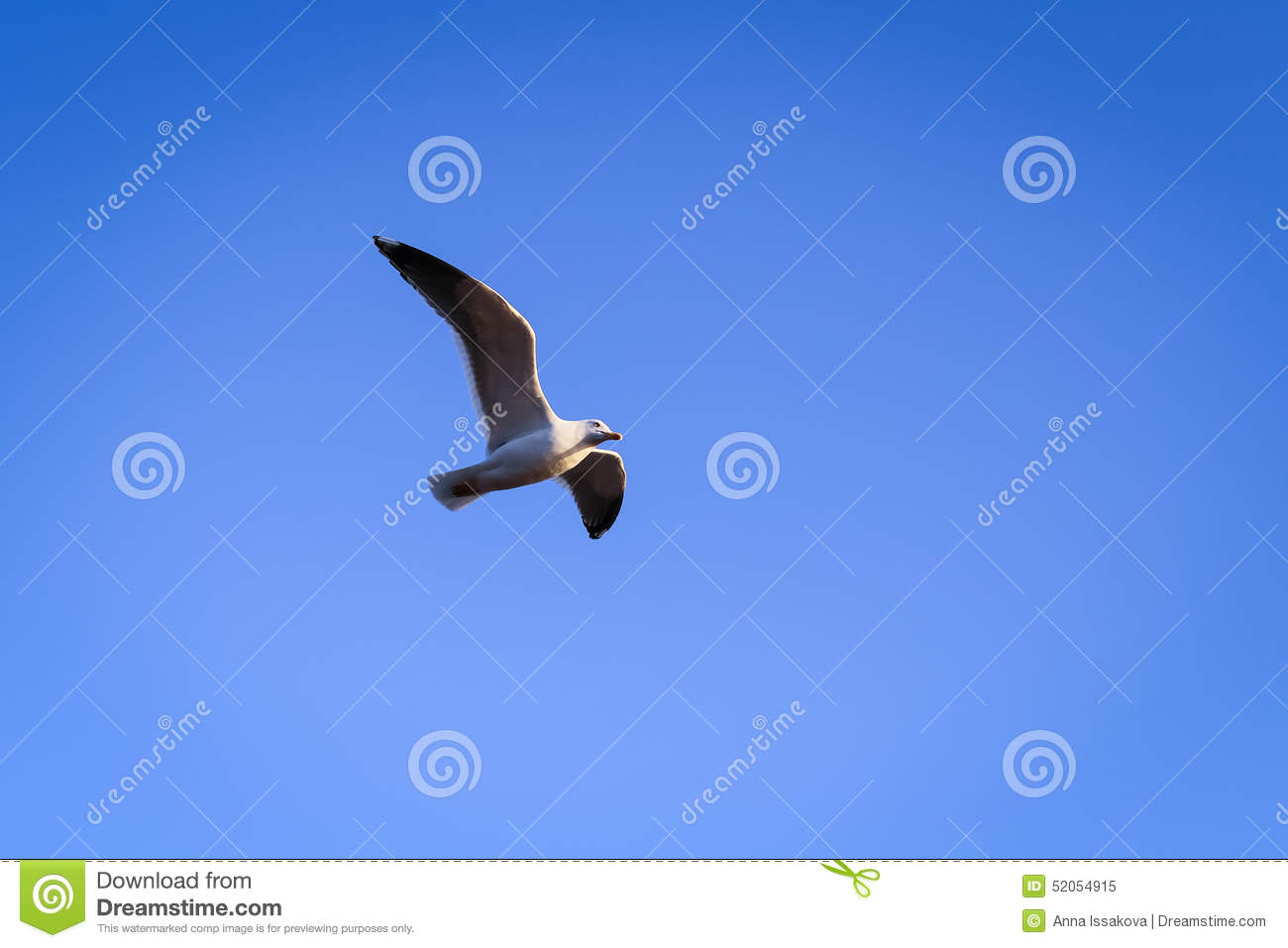 Beautiful Seagull Flying In The Sky Stock Photo - Image ...