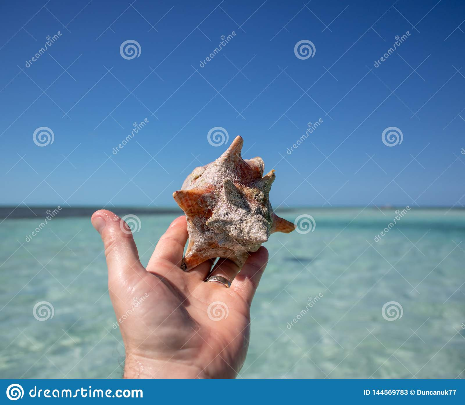 Beautiful shell on a tropical sandy beach being held by a man