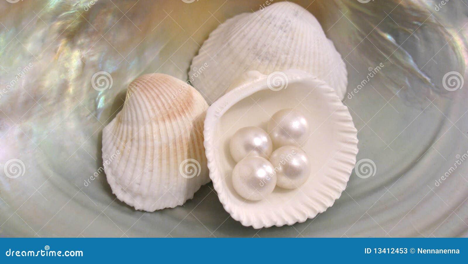 Download Beautiful Shells And Pearls Stock Image - Image of shellfish, shore: 13412453