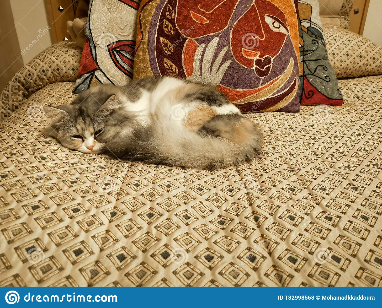 Beautiful shot of a cute white baby cat sleeping on a bed