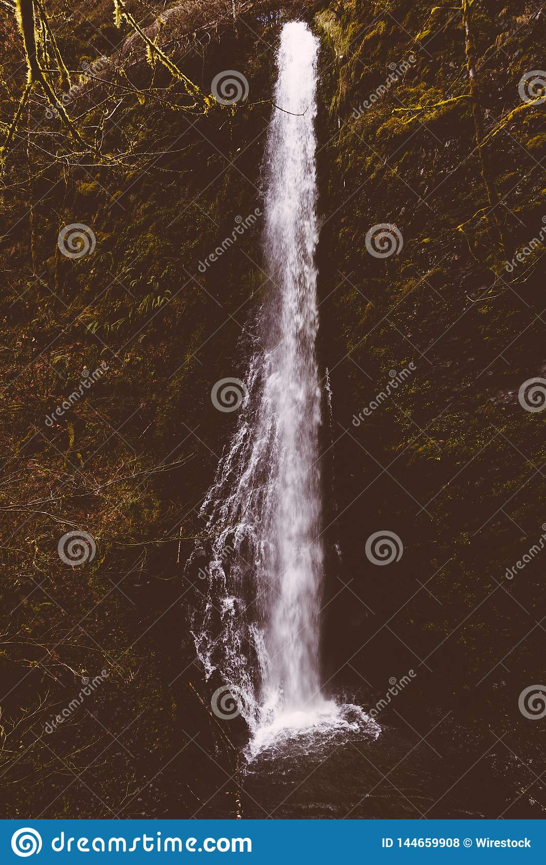 Beautiful shot of a waterfall in the forest surrounded by tall trees