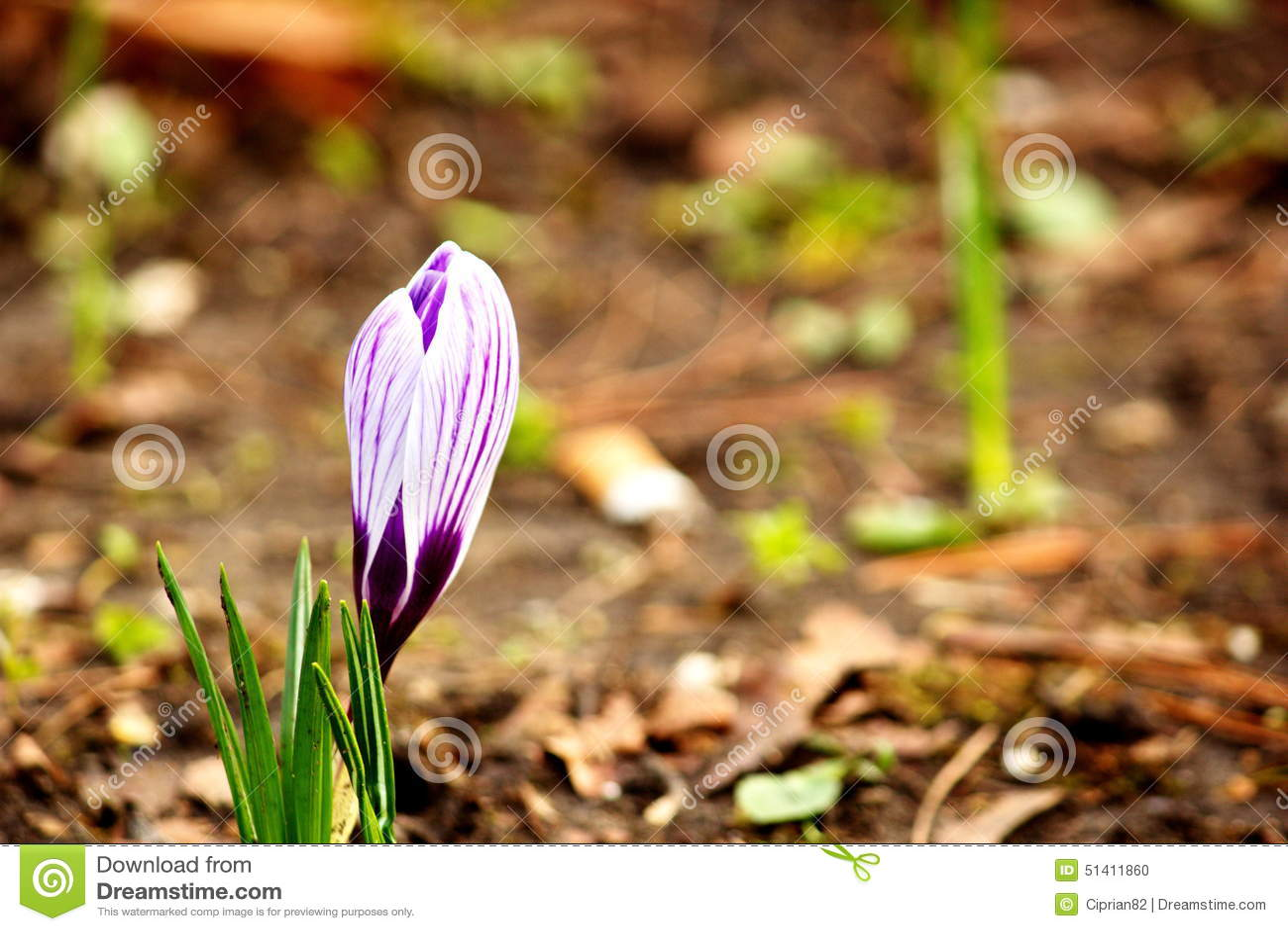 Beautiful single flower blooming near to a cigarette stump stock download beautiful single flower blooming near to a cigarette stump stock photo image of bloom izmirmasajfo