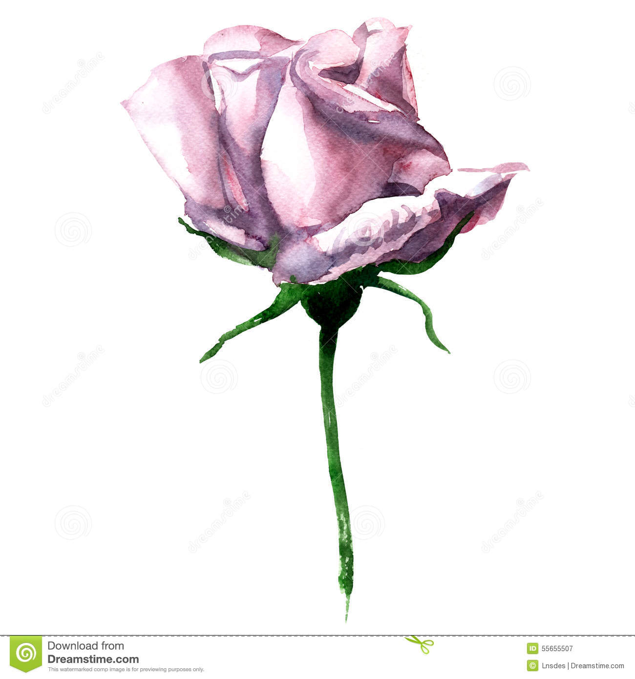 Beautiful Single Pink Watercolor Rose Isolated On
