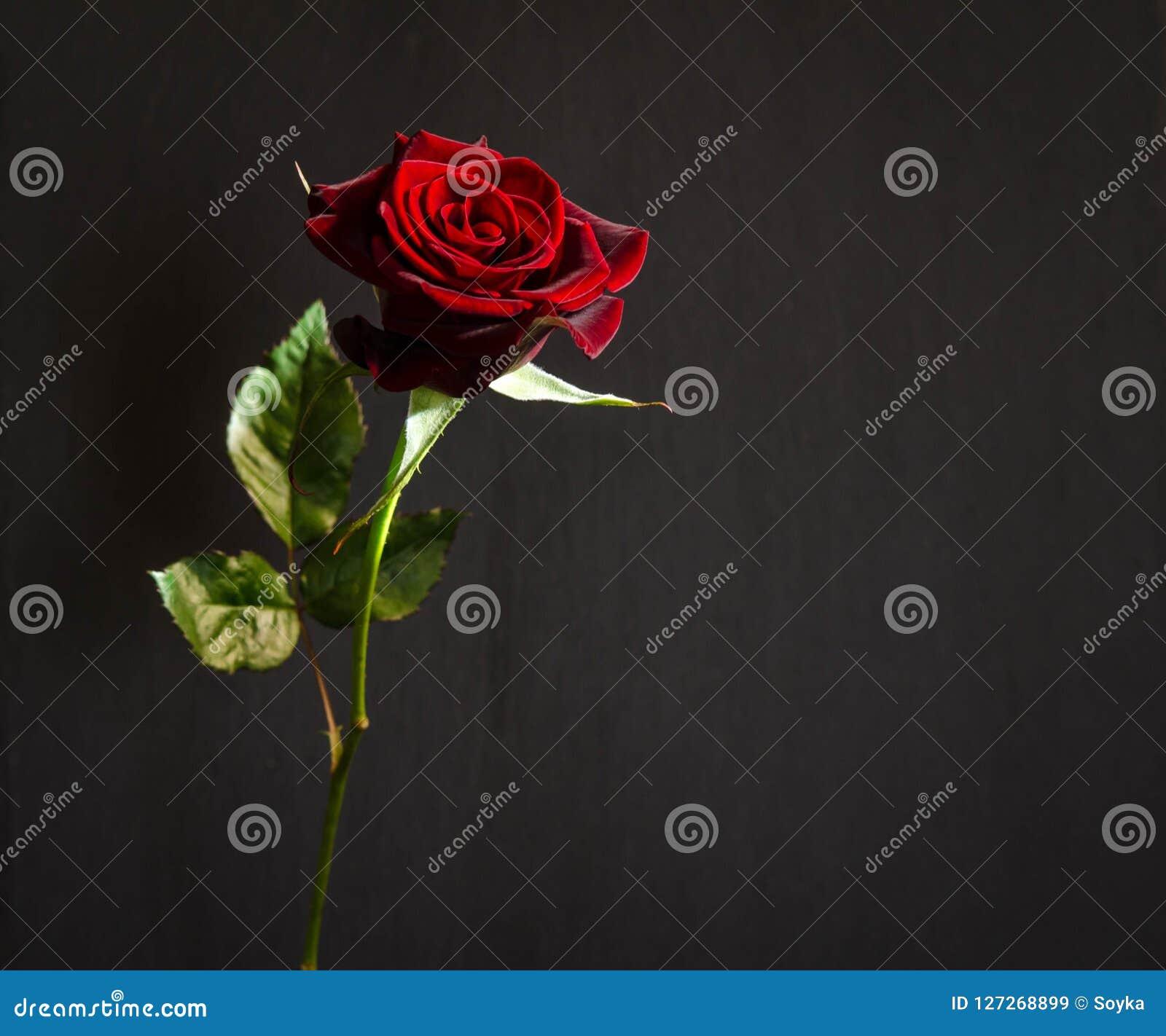 Scarlet Rose Nude Photos 42