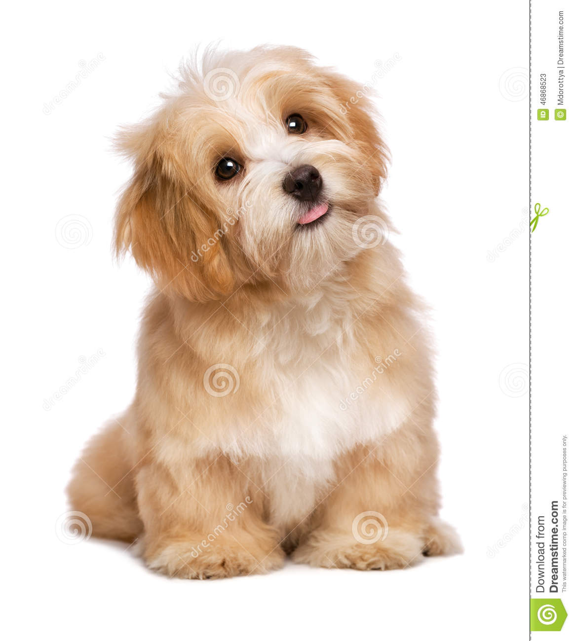 Dog Sitting For Puppies App