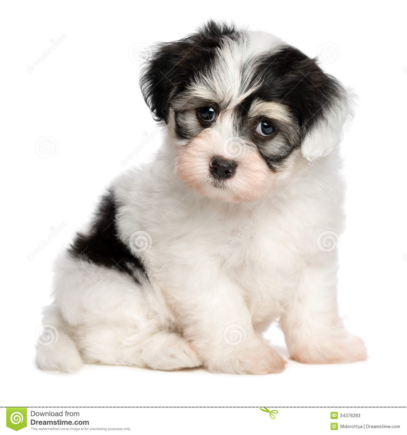 Cute Black And Spots Dogs