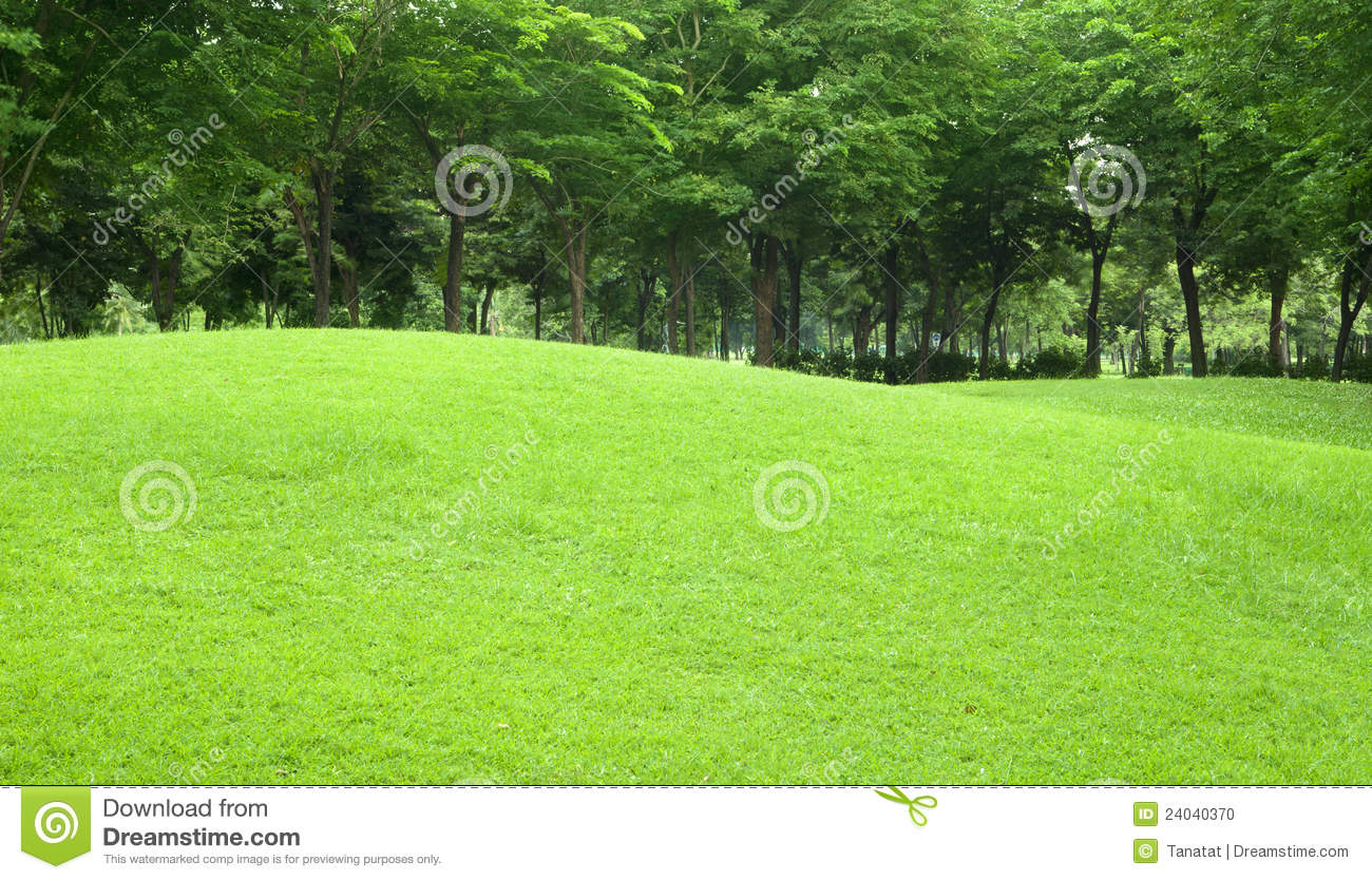 Beautiful sloping backyard with grass and tree in stock for Pretty grass