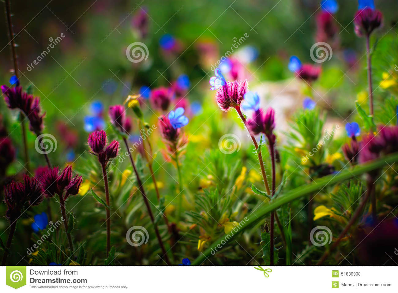 Beautiful small flowers growing in a meadow in spring stock photo beautiful flowers growing meadow small spring blue floral plant dhlflorist Images