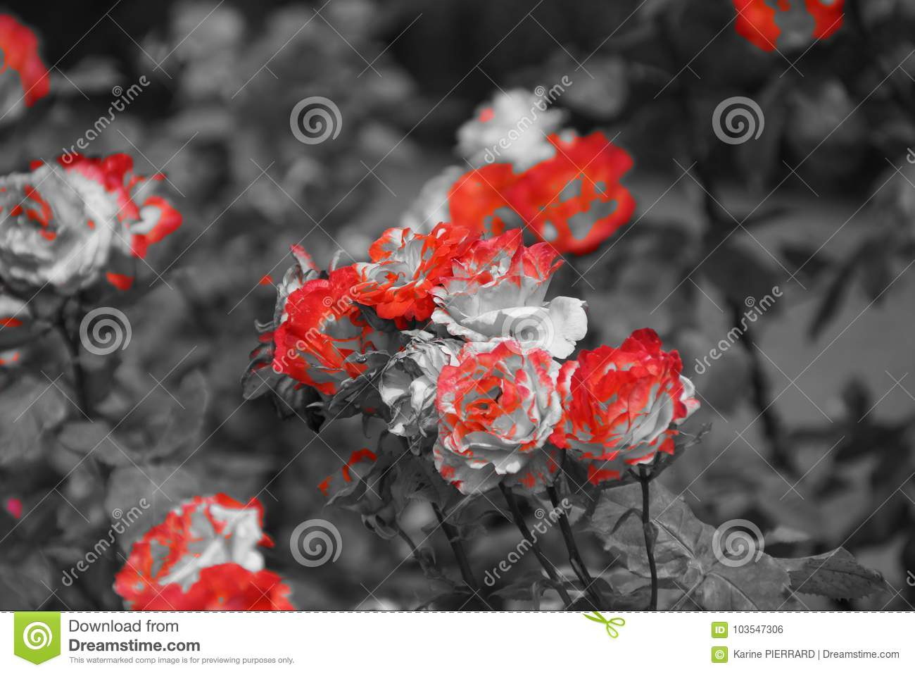 Beautiful Small Flowers In The Sensational Colors Black And White