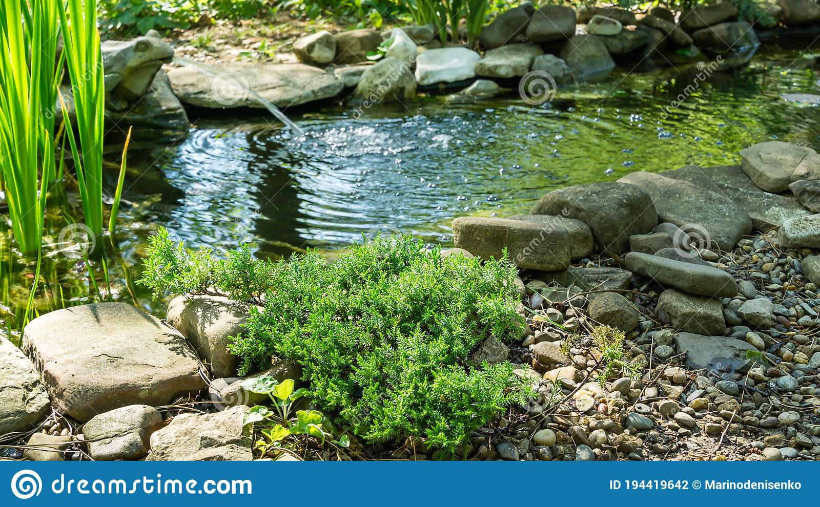 14 756 Small Garden Pond Photos Free Royalty Free Stock Photos From Dreamstime
