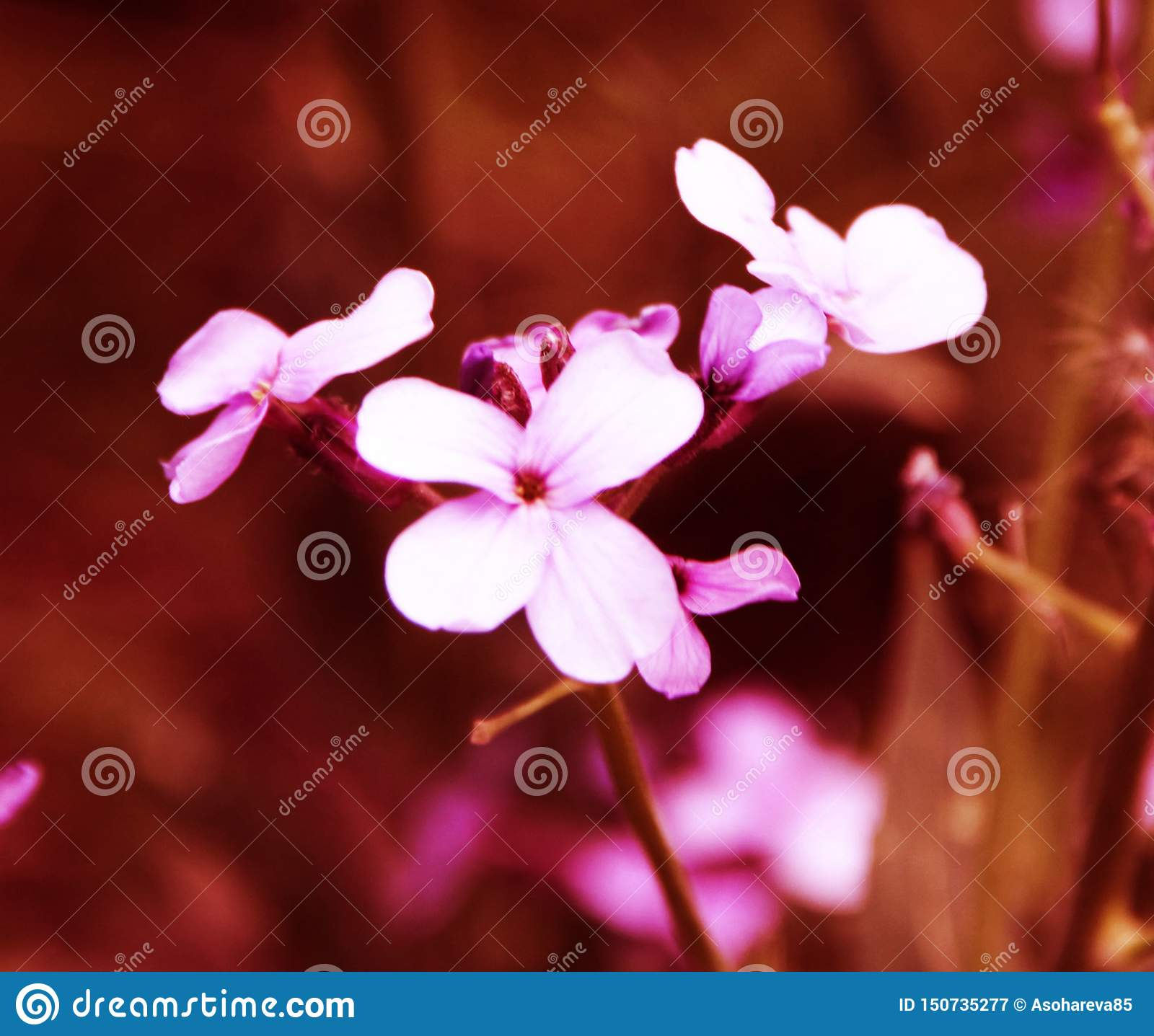 Beautiful small pink flowers on the flower bed