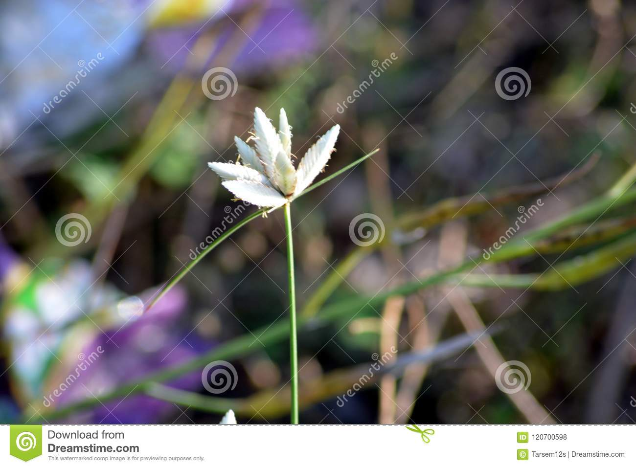 A Beautiful Small White Flower In Garden Stock Photo Image Of