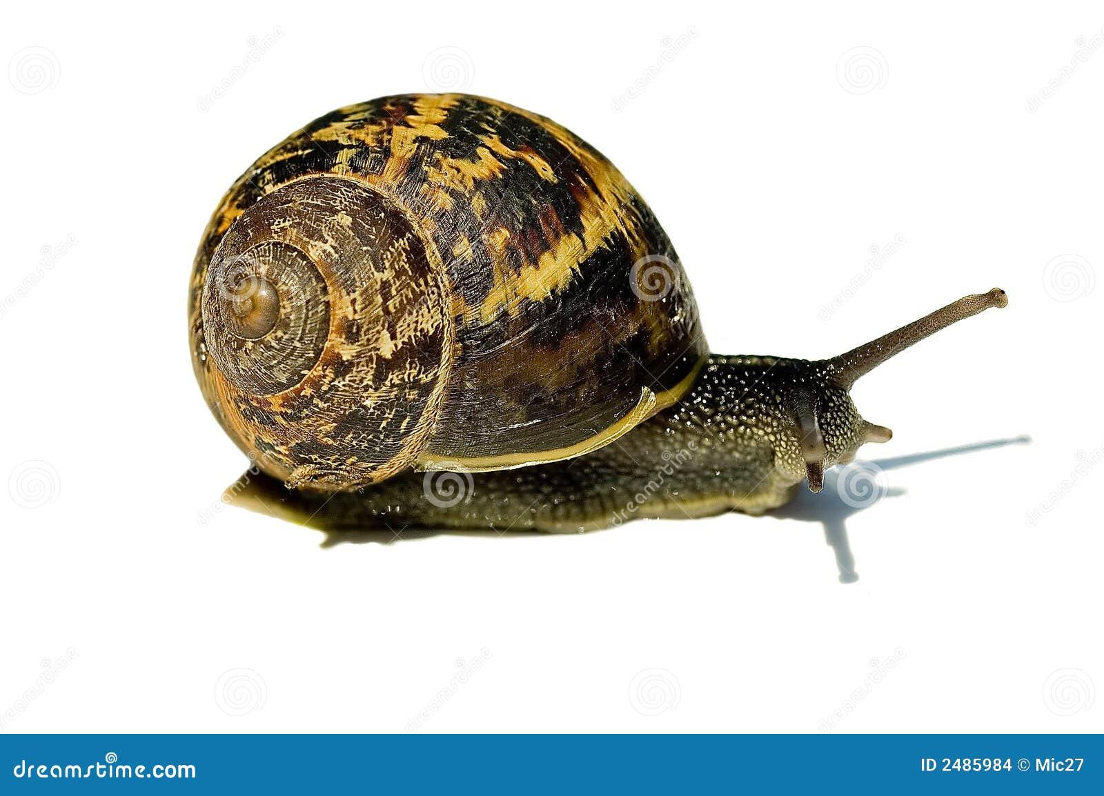 Beautiful Snail Stock Images
