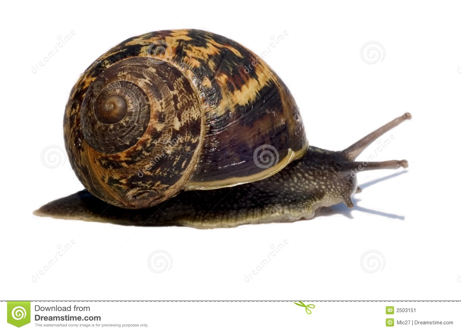 Beautiful Snail Stock Image. Image Of Detailed, Closeup