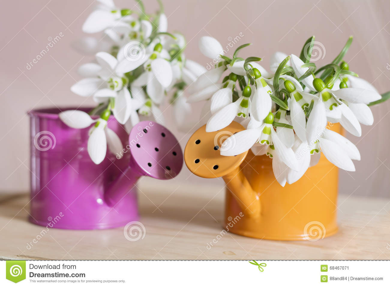 Beautiful snowdrops flowers in small decorative watering can vase royalty free stock photo reviewsmspy