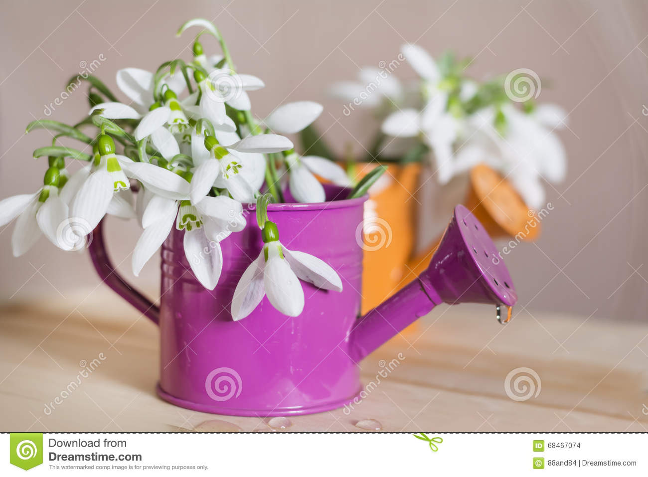 Beautiful snowdrops flowers in small decorative watering can vase beautiful snowdrops flowers in small decorative watering can vase reviewsmspy