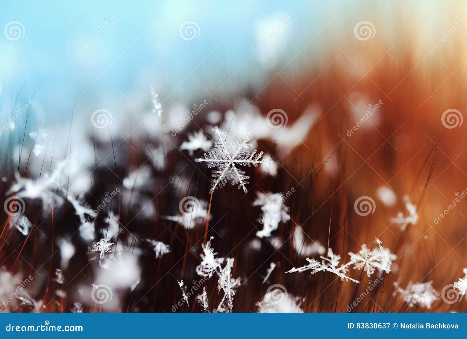 Beautiful snowflake lying on the fur hairs