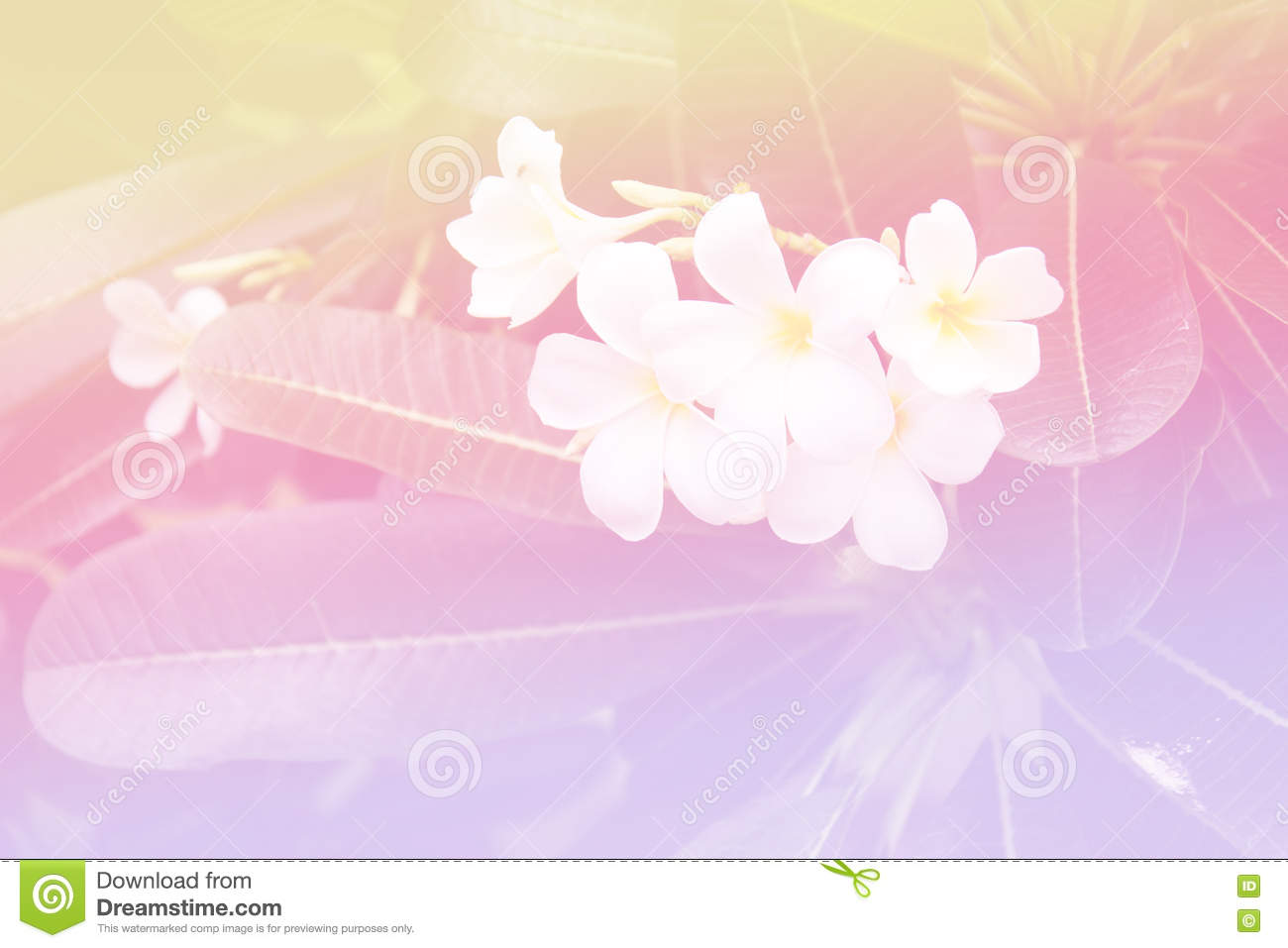 Beautiful Soft Color Pink And Blue Flowers Backgrounds Nature
