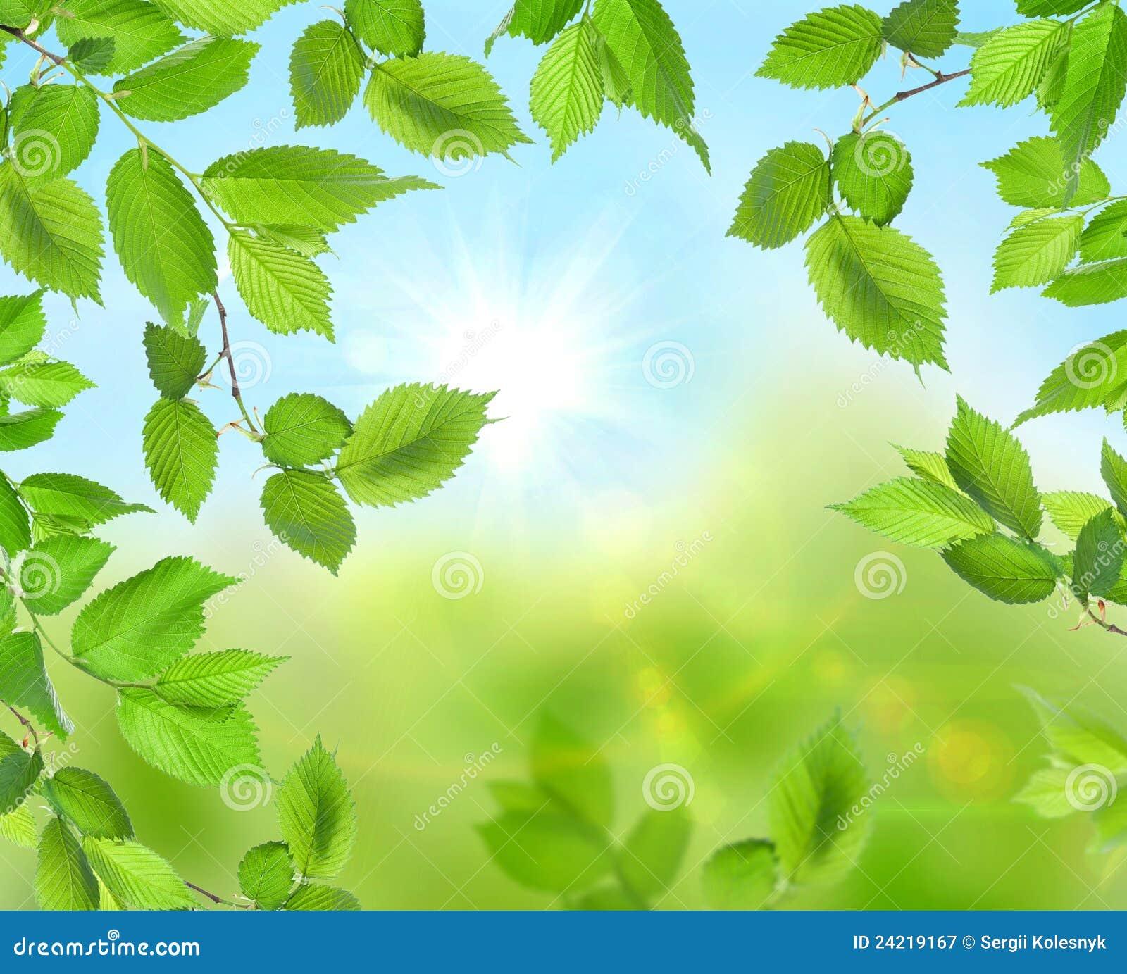 Beautiful Soft Green Background Royalty Free Stock Photography - Image: 24219167 - photo#33