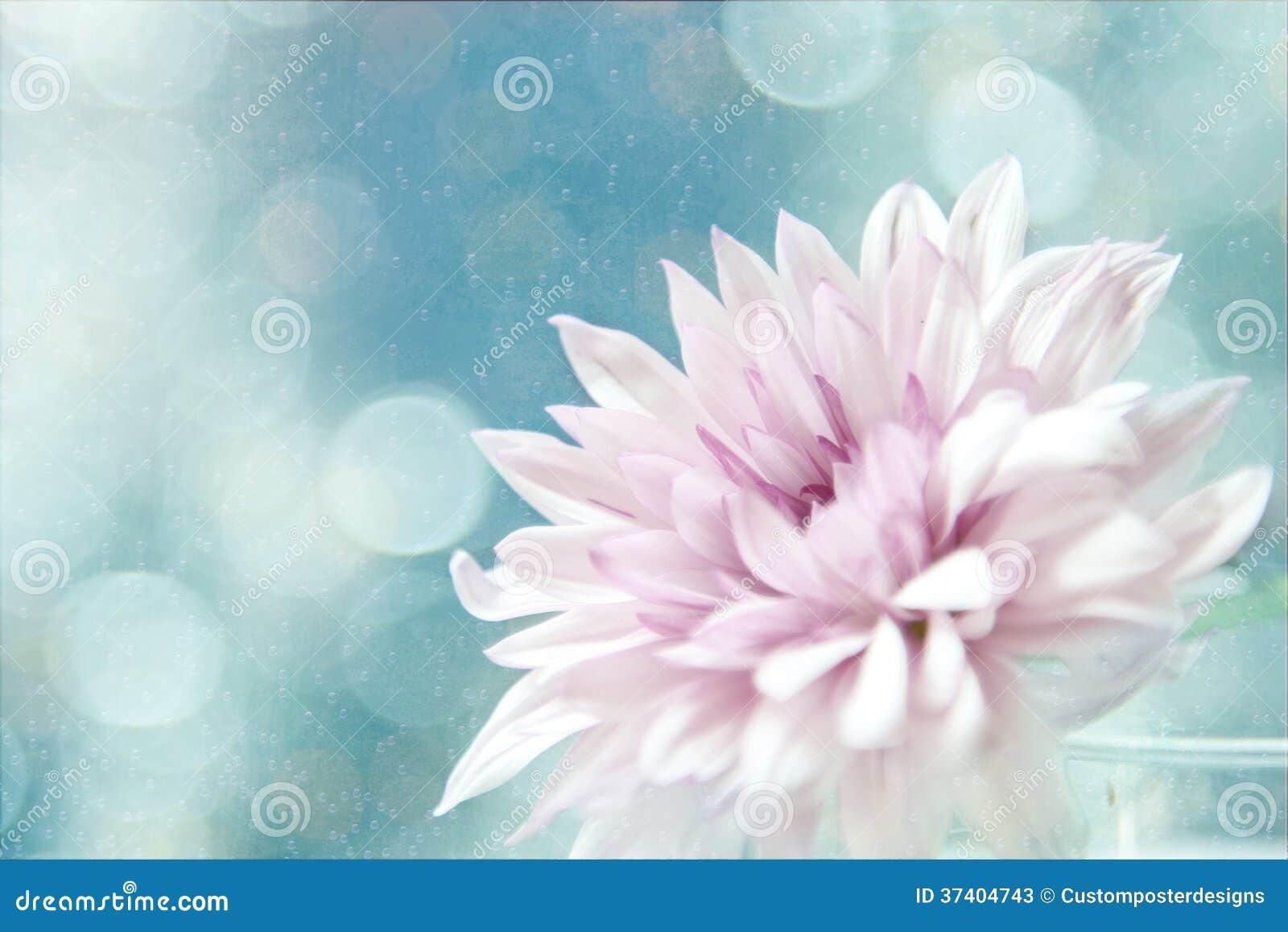 A beautiful soft pink flower.
