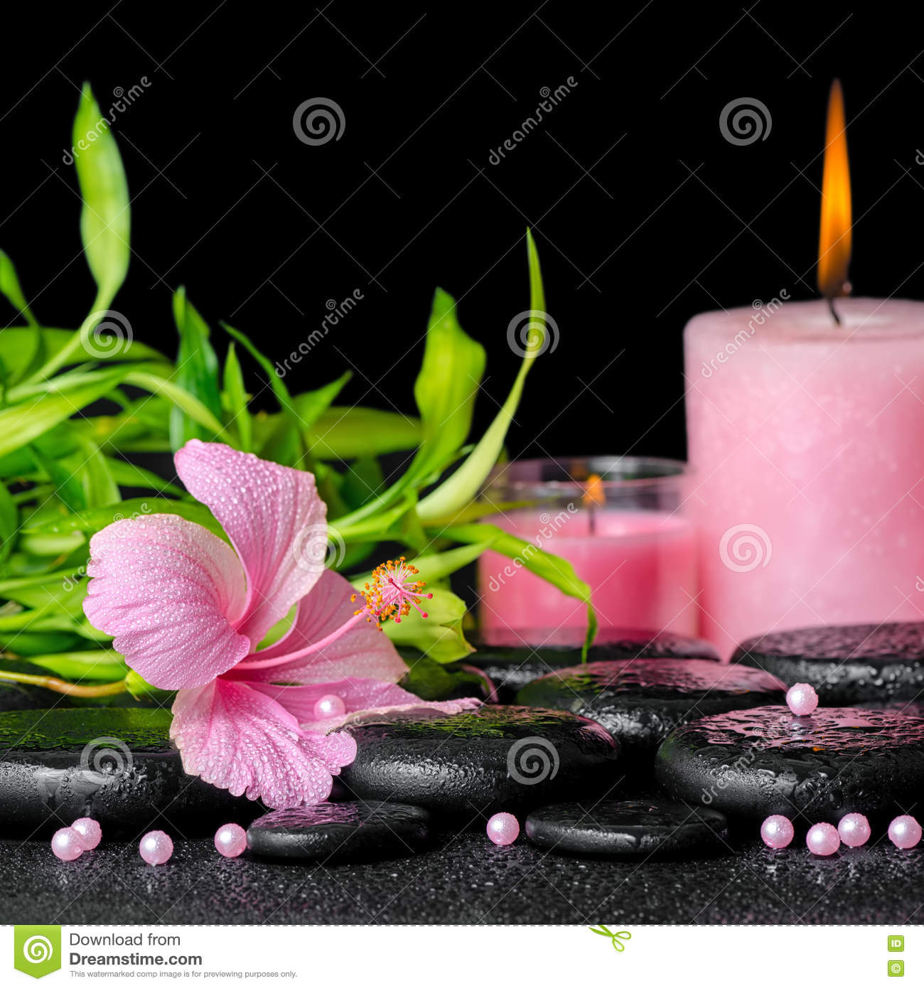 beautiful spa composition of pink hibiscus flower, twigs bamboo, pearl beads and candles on zen basalt stones with dew, closeup