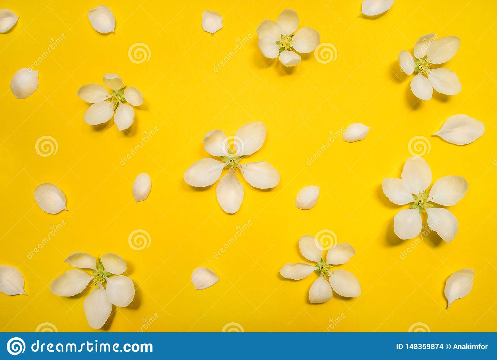 Beautiful spring apple flowers at yellow background.
