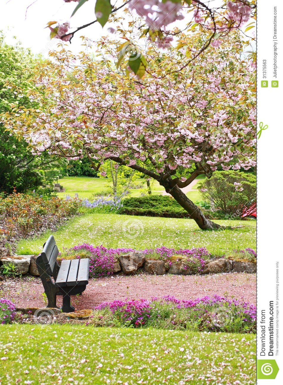 Beautiful Spring With Cherry Tree And Wooden Bench Stock