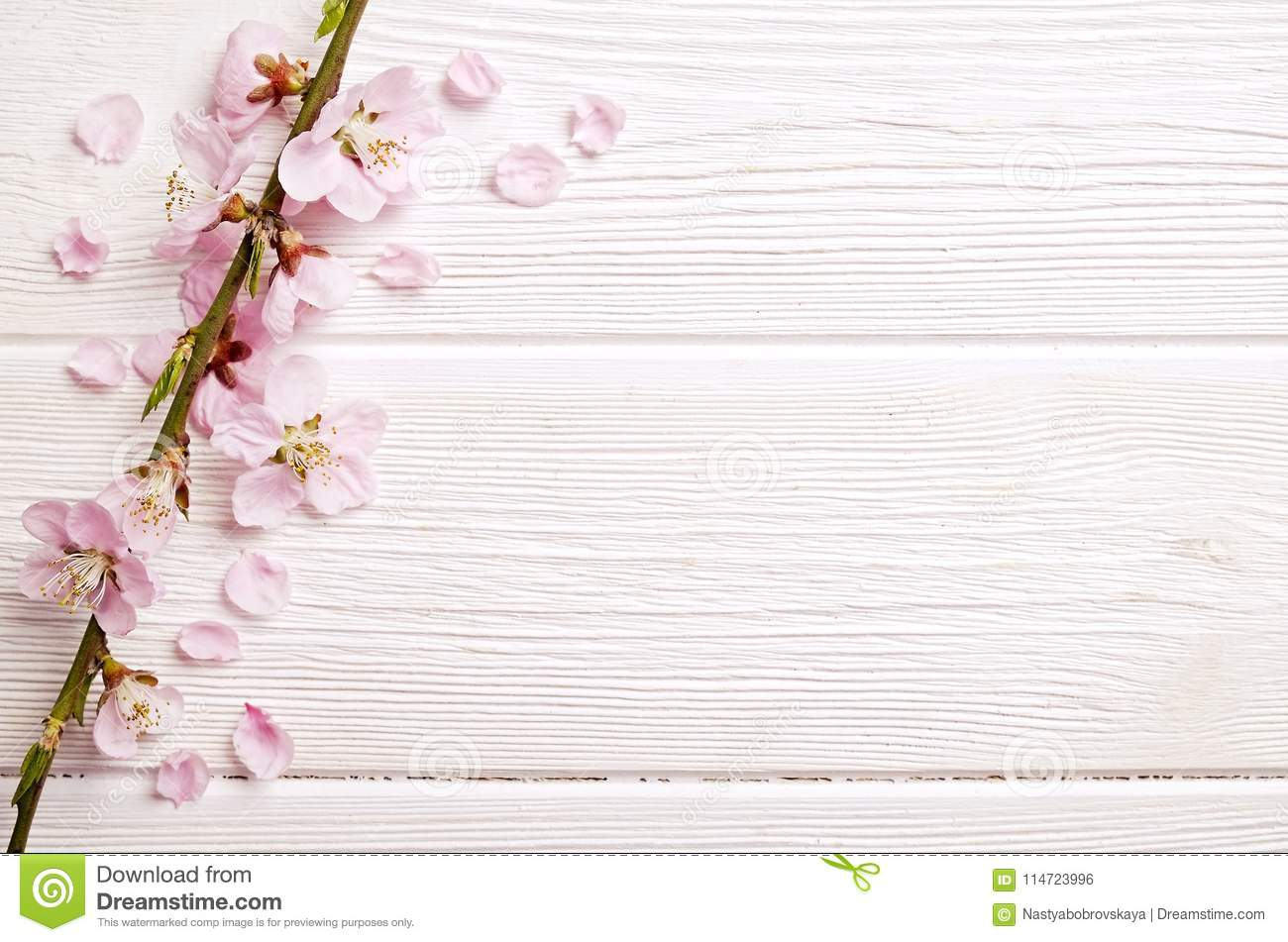 Beautiful spring composition with flowering blossoms on wooden background with copy space for text. Mother`s day greeting concept