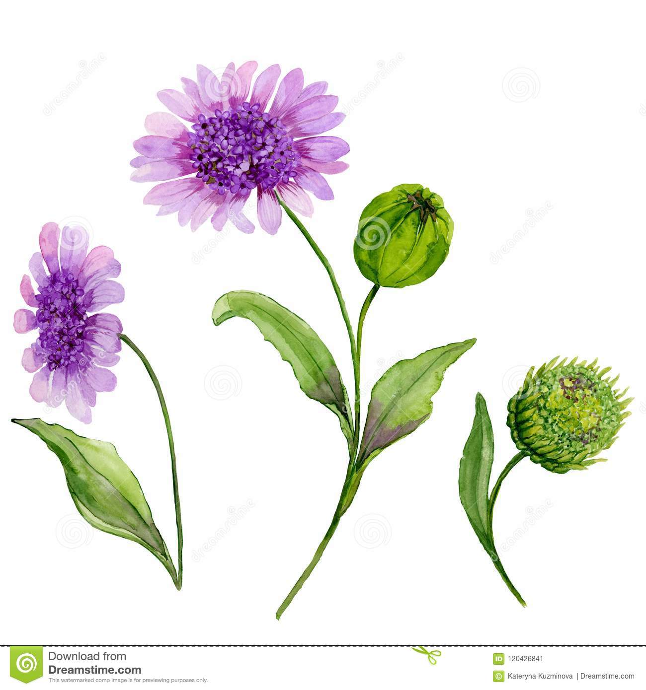 Beautiful spring floral illustration purple daisy stock purple daisy flowers on a stem with leaves and closed bud isolated on white background watercolor painting hand painted image izmirmasajfo