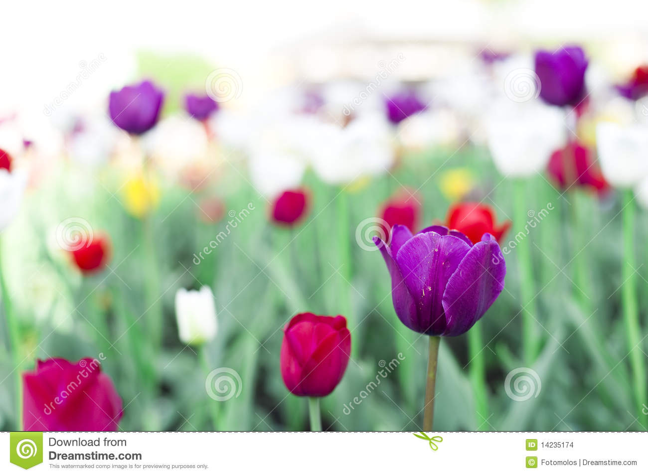 Beautiful Spring Flowers Stock Images - Image: 14235174
