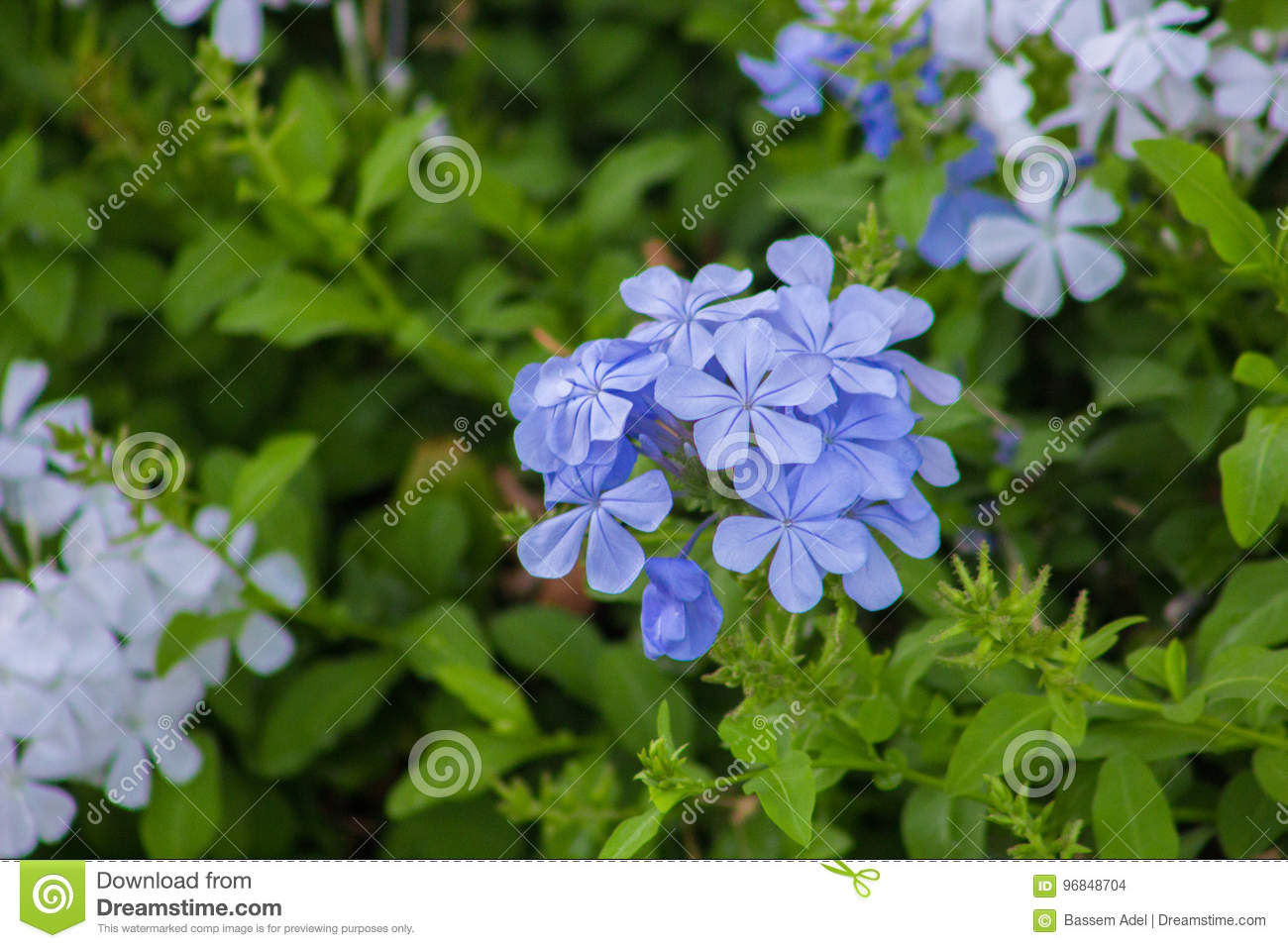 Beautiful spring flowers blooming under the sun different types of download beautiful spring flowers blooming under the sun different types of flowers stock photo mightylinksfo